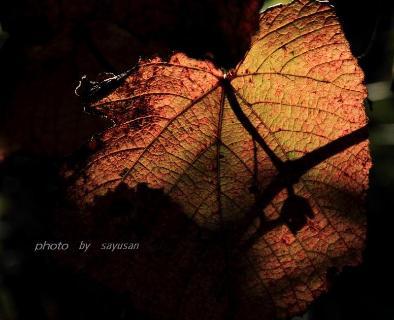 IMG_0525-X-00.jpg