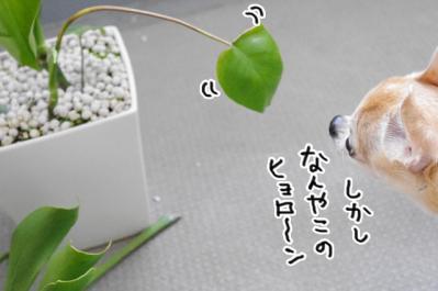 IMGP1266-4.jpg