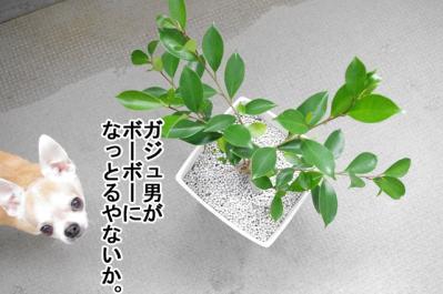 IMGP1850-1.jpg