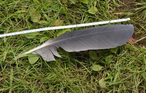 feather_20130725_DSC_1067.jpg