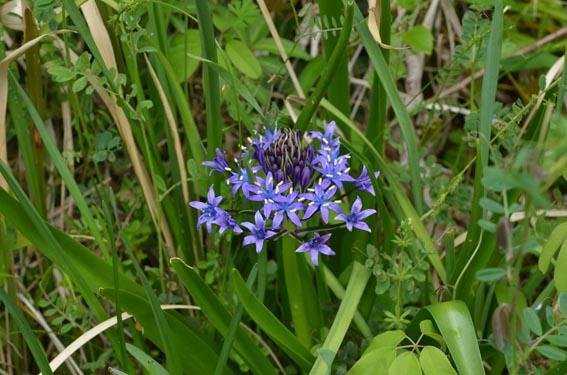 flower_20130418_DSC_3782.jpg