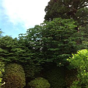 2012-06-10T07-47-30_2_convert_20130718115243.jpg