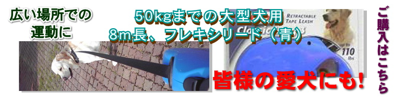 FlexiBlueBanner1.jpg