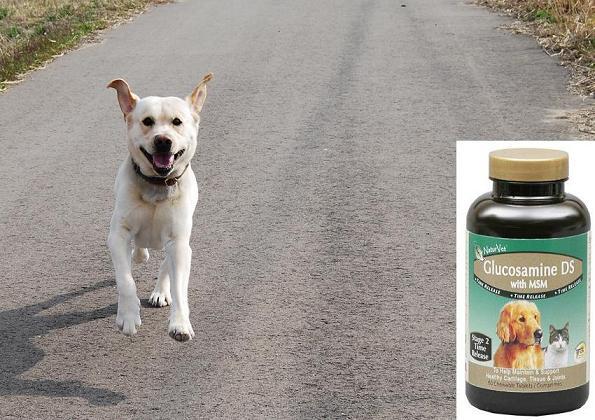 犬用グルコサミンの写真