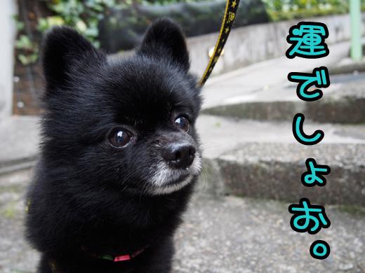 bokumitainakawaiiko.jpg