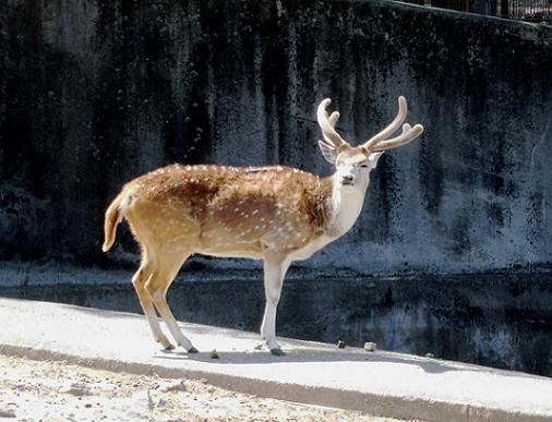 13.5.3東武動物公園 (50)