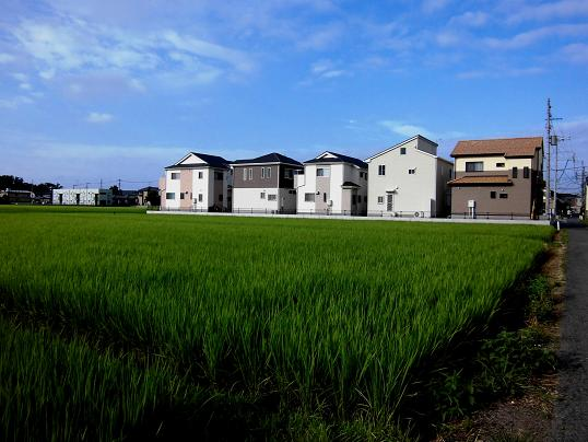 3 13.7.20ブログ用・朝散歩 (44)
