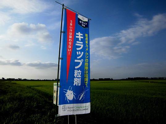 4 13.7.20ブログ用・朝散歩 (24)