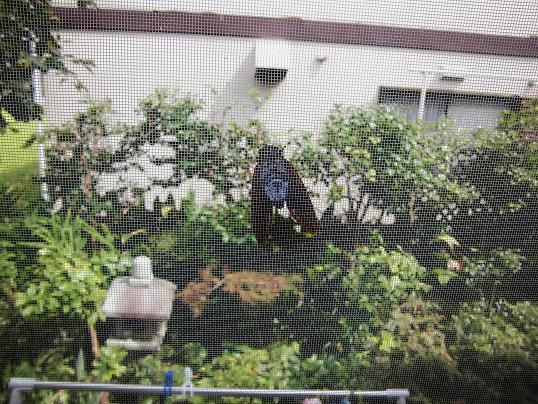 8 13.8.2大宮祭り (8)