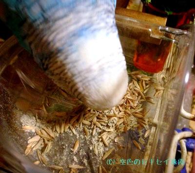 南シチリアの岩(粉末)とりあえず食べる珠霞