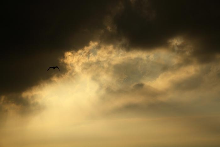 a_Bird.jpg