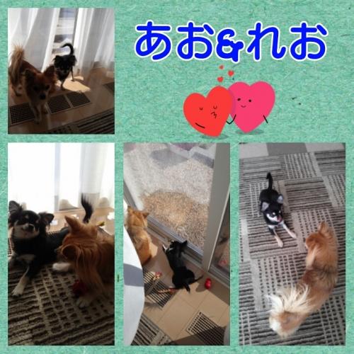 201311251544266ad.jpg