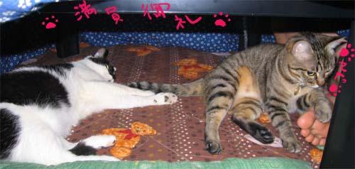 kotatsu-nyanko.jpg