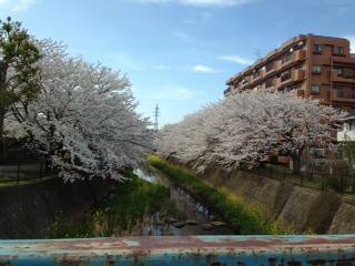 3月28日今年の桜