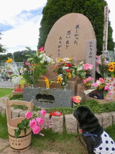 130622お墓参り。