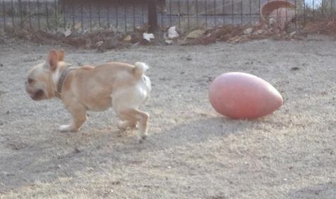 赤ボール②
