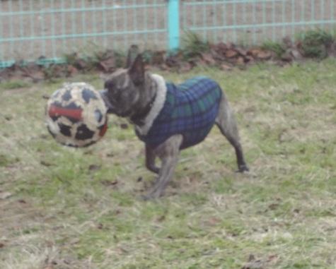 ブヒサッカー