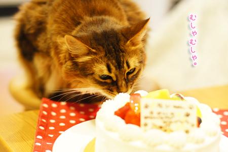バースデイケーキを食べるモンさん