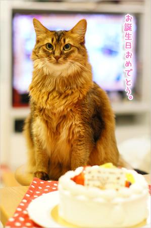 バースデーケーキ@ソマリ猫のお誕生日