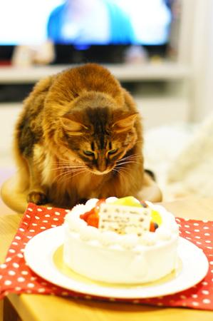 ラ・テールセゾンのバースデーケーキ食べたいにゃ。