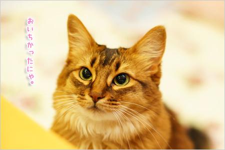 美味しい顔する猫@ソマリ