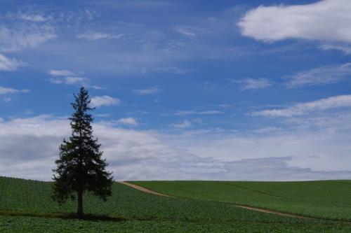 06christmastree.jpg