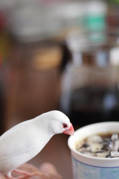 iced coffe nozoiteru (2)