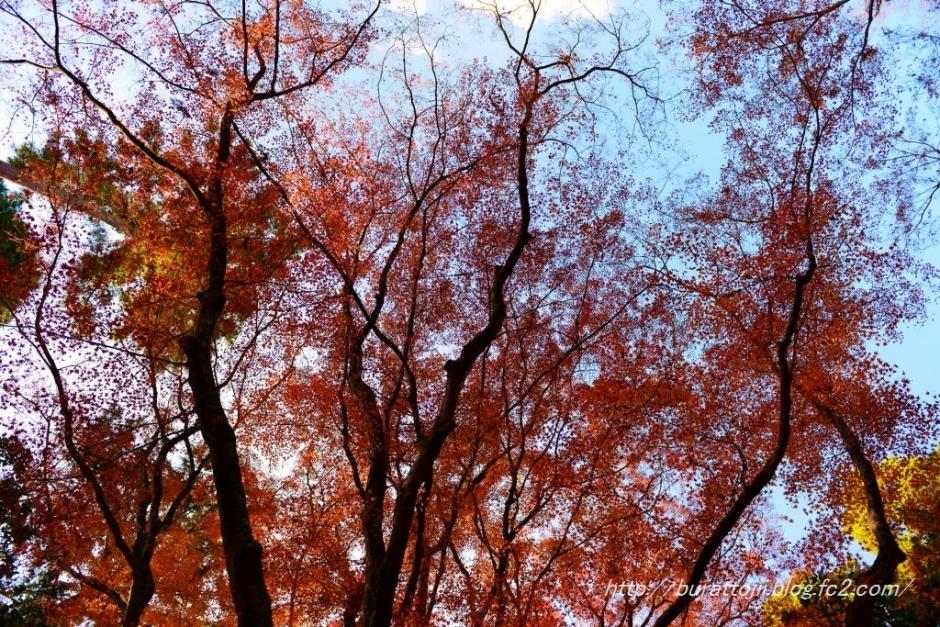 4.2013.12.03北野天満宮