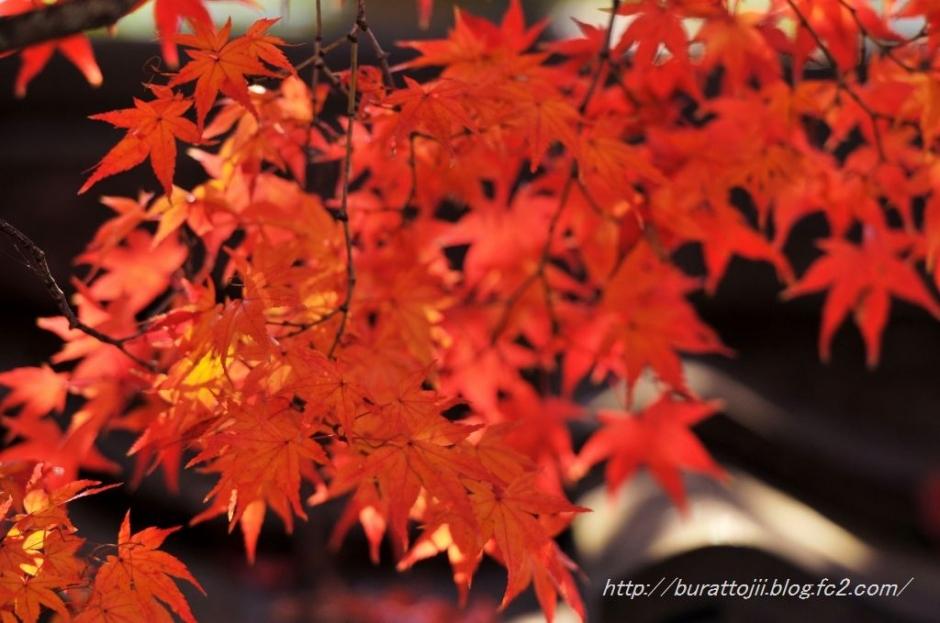 8.2013.12.04嵐山