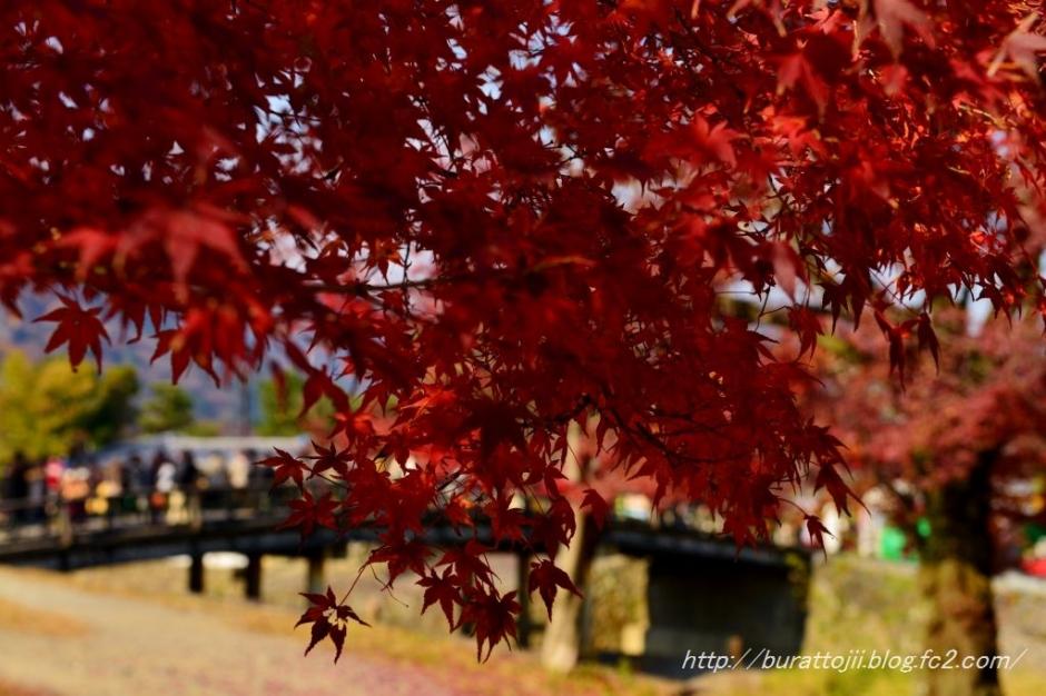 5.2013.12.04嵐山