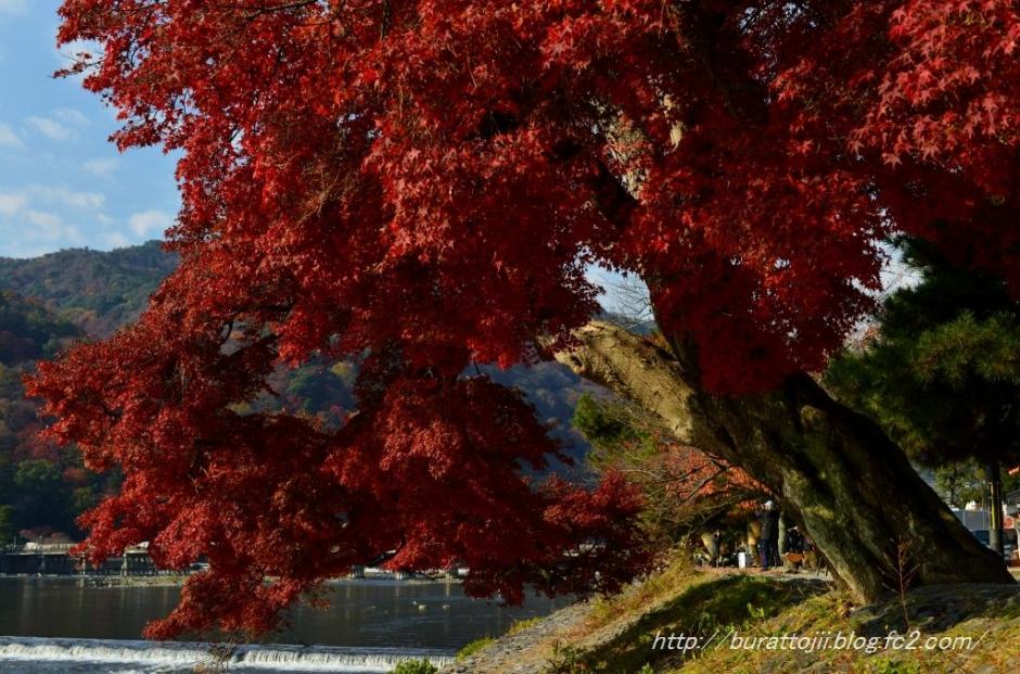 3.2013.12.04嵐山
