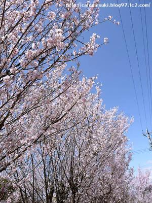 花見山公園@福島県福島市