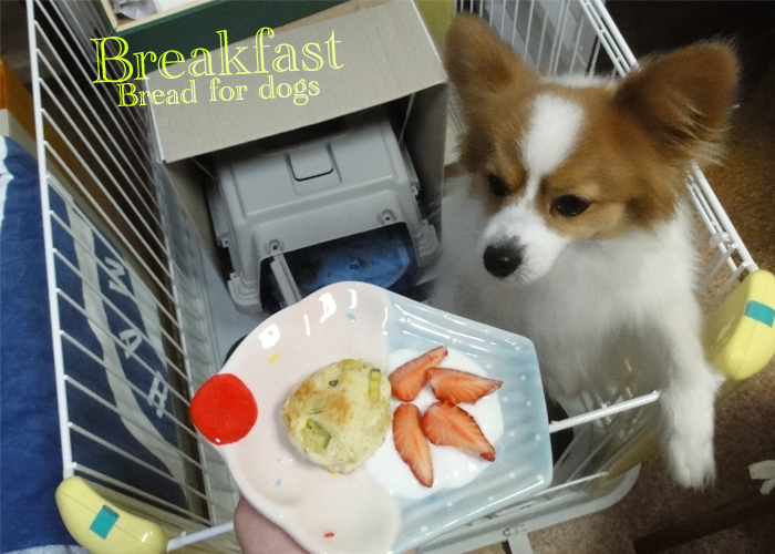 Bread for dogs & Strawberry & Yogu