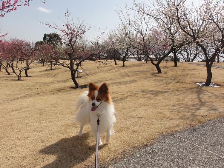 フラワーガーデンの梅のお花見だね♪