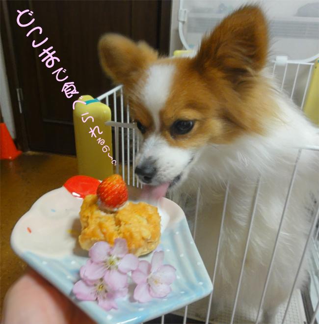 わぁ~~~~い! ケーキだ! ケーキだ!