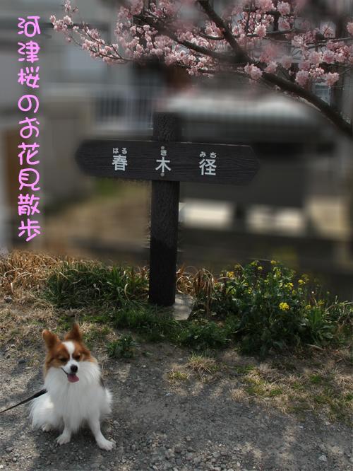 「春木径」でお花見散歩♪