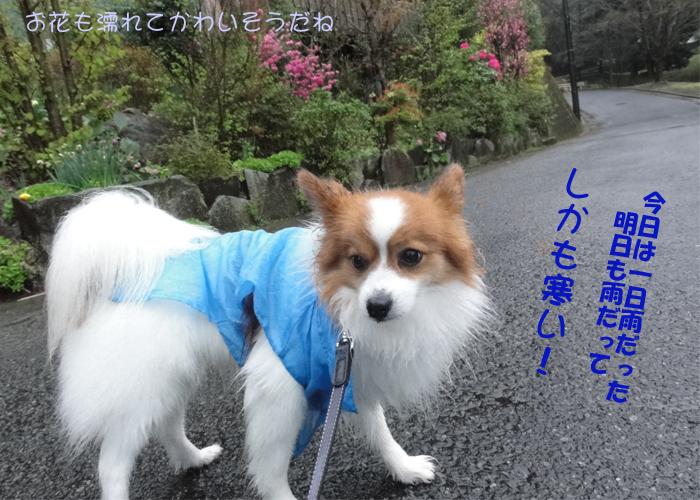 1日中土砂降り&サムイー!