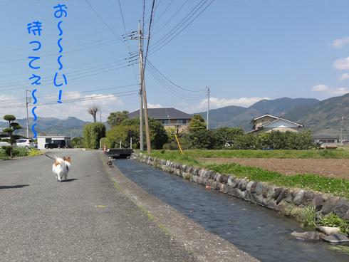 道路をフラフラ歩く「鴨さん」を追いかけて