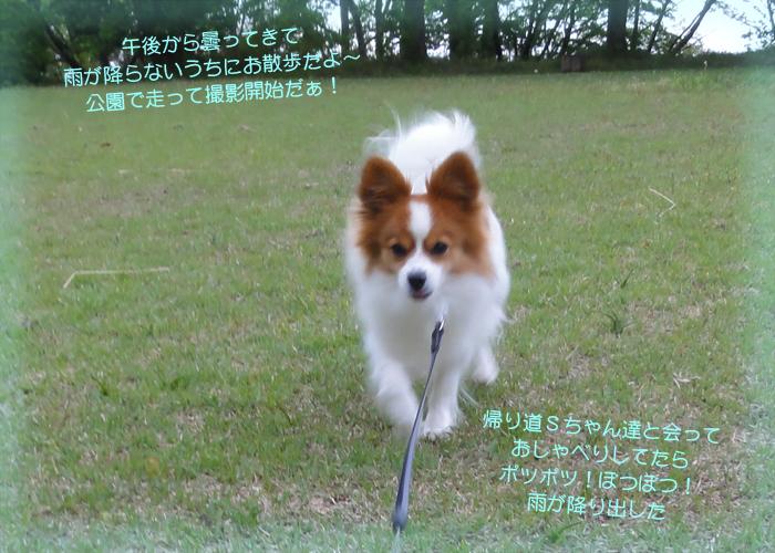 公園で走り回って最高!