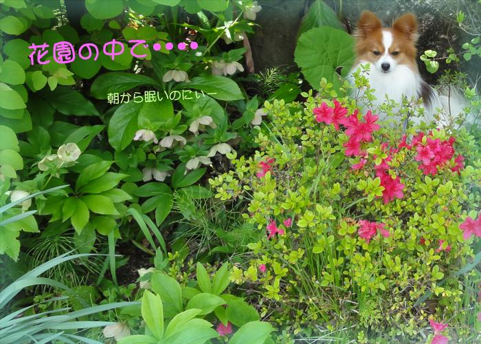 花園の中のかわい~レオくん