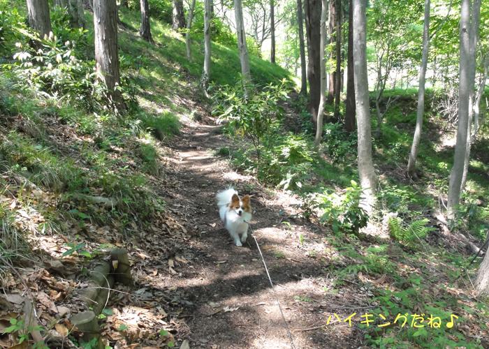 林道を散策して