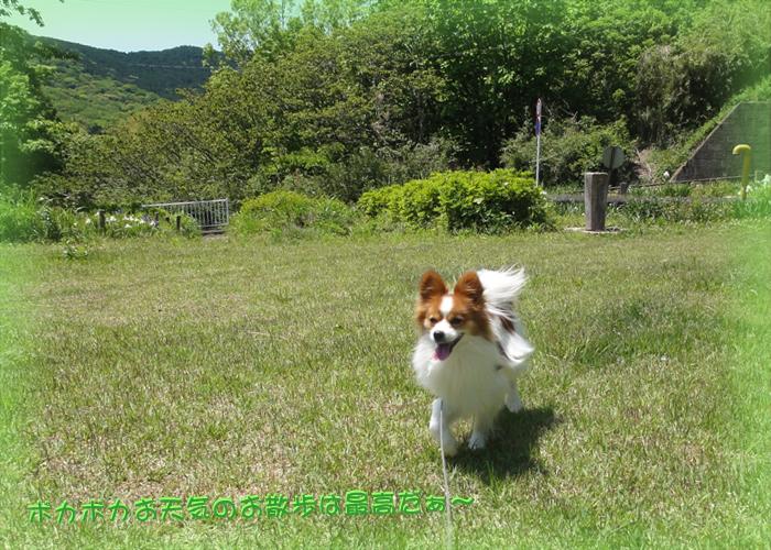 公園で元気いっぱい走り回って大喜びだね