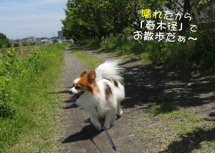 いい天気で『春木径』でお散歩