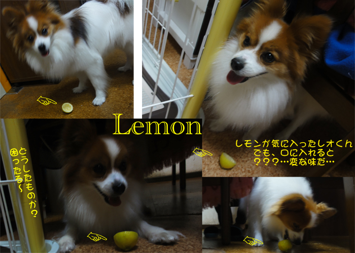 「ボクの檸檬!」
