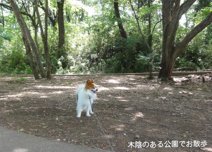 森の中の公園