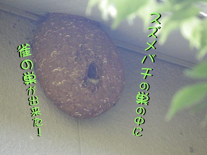 スズメバチの巣の中は?