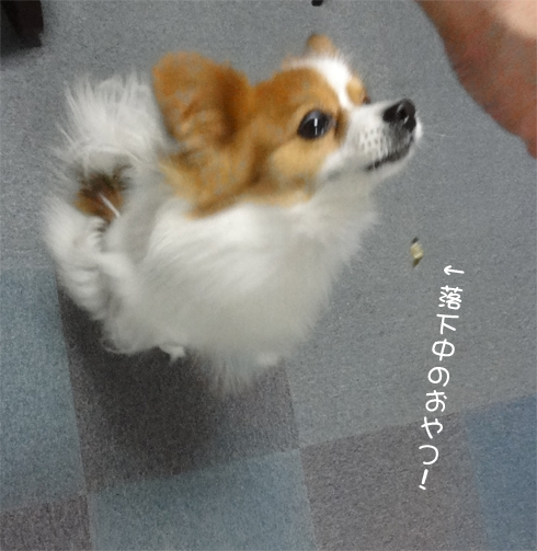 ハイ! ジャンプ!