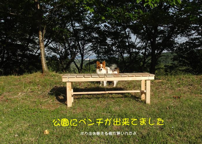 公園にベンチが出来ていた