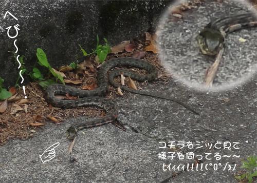 生きてる蛇!