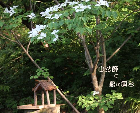 ヤマボウシ&鳥の餌台